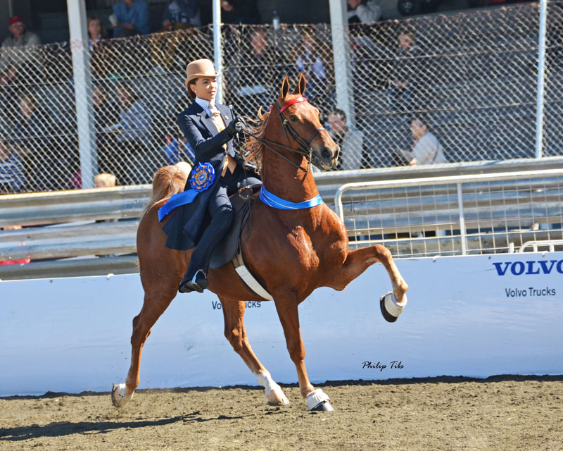 Saddle Seat Equitation Mountain View Stables